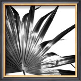 Black and White Palms I Prints by Jason Johnson