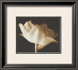 Champagne Tulip IV Prints by Charles Britt