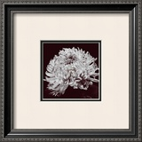 Chrysanthemum Art by Bill Philip