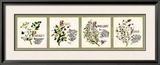 Kitchen Herbs II Prints by G. Phillips