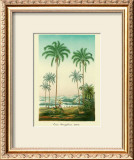 Coco Palm Art by Ch. Lemaire