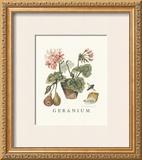 Geraniums Prints by Victoria Morland