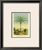 Maximiliana Palm Prints by Ch. Lemaire