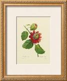 Passion Flower Print by Pierre-Joseph Redouté