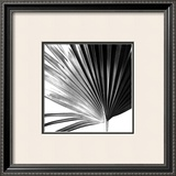 Black and White Palms IV Prints by Jason Johnson
