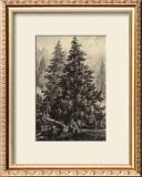 Spruce Pine Prints by Ernst Heyn