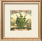 Mint Print by Theodor de Bry