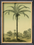 Astrocaryum Palm Print by Ch. Lemaire