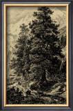 Arolla Pine Prints by Ernst Heyn