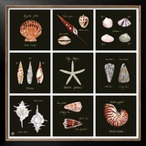 Striking Shells Nine Patch Prints by Ginny Joyner
