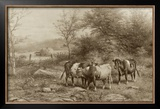 Grazing Cattle Print by George Riecke