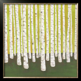 Birch Forest Print by Lisa Congdon