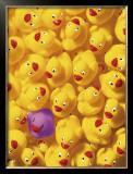 Quack, Quack I Prints by Dave Brullmann