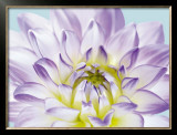Dahlia in Teal I Prints by George Fossey