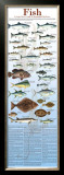 A Seafood Lover's Guide to Sustainable Fish Choices Art by Brenda Gillespie