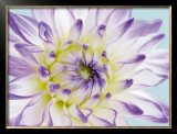 Dahlia in Teal II Posters by George Fossey