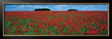 Cotswolds, Field of Poppies Posters by Tom Mackie