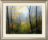 Woodland Mist Prints by Robert Striffolino