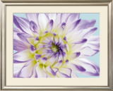 Dahlia in Teal II Poster by George Fossey