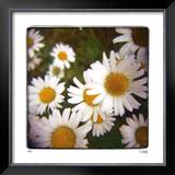 Sunny Side Up Limited Edition Framed Print by Rebecca Tolk
