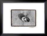 Sand Treasures VI Poster by Laura Denardo