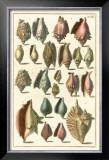 Seba Shell Collection III Prints by Albertus Seba