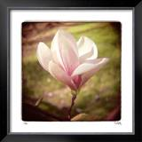 Spring Magnolia Limited Edition Framed Print by Rebecca Tolk