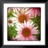 Pink Limited Edition Framed Print by Rebecca Tolk