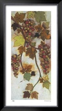 Vineyard Visions III Limited Edition Framed Print by Aleah Koury