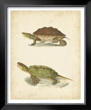 Turtle Duo II Print by J.W. Hill