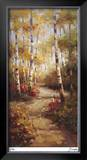 Forest Walkway Limited Edition Framed Print by Stephen Douglas