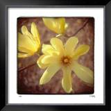 Yellow Magnolia Limited Edition Framed Print by Rebecca Tolk