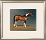 Stanhopes Diddicoy Limited Edition Framed Print by Susan Crawford