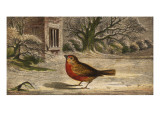 A Robin on the Snow-Covered Ground. (Erithacus Rubecula) Giclee Print