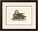 Duck IV Prints by John Selby