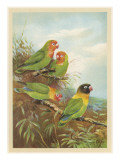 Brightly Coloured Parrots Giclee Print