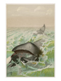 A Whale from Greenland Giclee Print