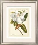 Magnificent Magnolias I Print by Jacob Trew