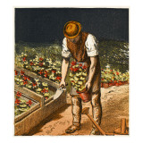 A Victorian Gardener in the Midst of Potting Duties Giclee Print