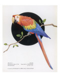 Brightly Coloured Parrot Giclee Print