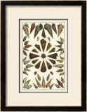Seba Shell Collection II Prints by Albertus Seba