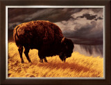 Buffalo Art by Greg Beecham