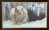 Dozing Lynx Art by Robert Bateman