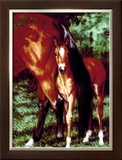 Tail End Framed Giclee Print by Susan Sponenberg