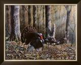 Wild Turkeys Poster by Will Goebel