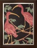 Scarlet Ibis II Art by Dan Goad
