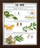 Silk Teaching Chart Prints by  Deyrolle