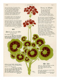 Design of Geraniums (Pelargoniums) Giclee Print