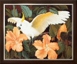 Cockatoo and Hibiscus Poster by Jessie Arms Botke