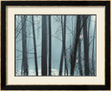 Spring Mist II Prints by Marvin Pelkey